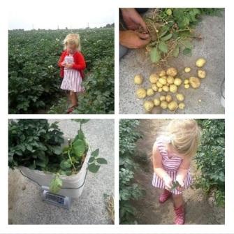 aardappelen Juni 2017